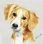 Puppy portrait - colored pencil drawing by JasminaSusak