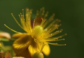 just another bit of yellow... by clochartist-photo