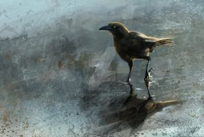 Bird In A Puddle by stevegoad