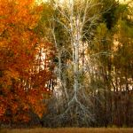 Shades of Autumn 2016, 17 by MadGardens