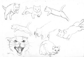 Cat Pose Practice by Novum-Semita