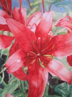 Red Flower by H-Heather