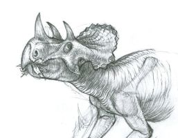 Avaceratops by WarrenJB