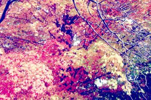 candied autumn by ruby-misted-eyes