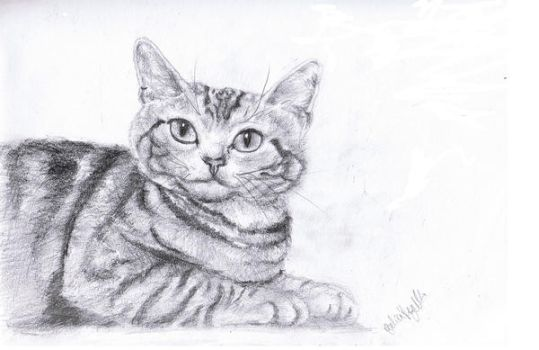 Tabby Cat by TheClicheConnoisseur