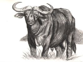 Cape Buffalo Charcoal by JenDragon