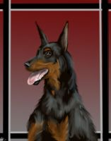 Doberman Pinscher by neecolette