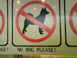 No Dog Please by Fifi-ariadi