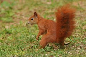 Squirrel II by parisky-stock