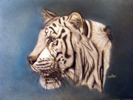White Tiger Pastel And Pencil by ADRIANSportraits
