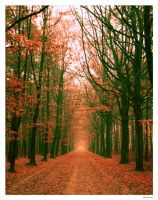 tunnel of leafs by sm00keh