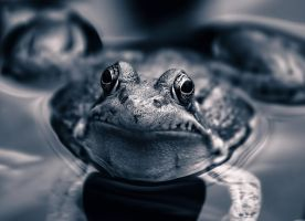 Silver Frog by znkf0908