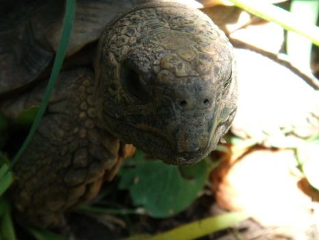 too CLOSE  tortoise by pattsy