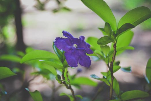 Lonely Purple by ItBazooka