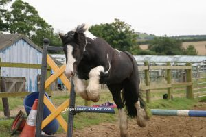 Piebald horse jumping8_stock by popui