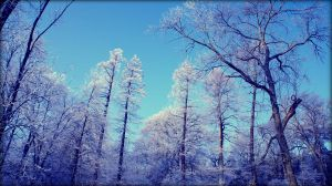 winter by Chococosmos