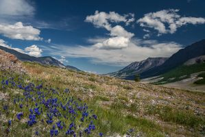 Altai by box426