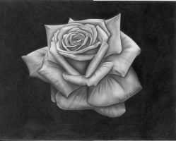 The Rose -  Final by Molock67