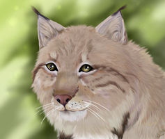 Lynx by Ithfifi
