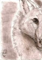 Wolf Black/White by TheWolfMadness