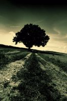 The Long Road by DREAMCA7CHER