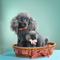sold Poodles by trinnytoy