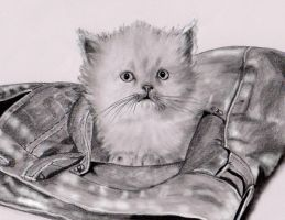 pocket kitten by dielectric-m