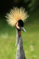 Bird Mohawk 7984692 by StockProject1