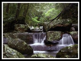 Rainforest Stream by FireflyPhotosAust
