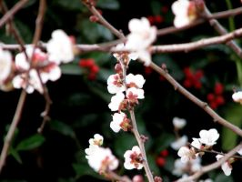 peach blossoms by melloncolliebaby