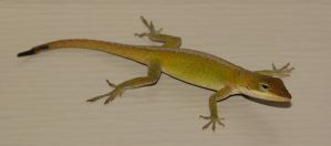 Anole by fractalfiend