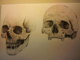 Skull by Sombie69