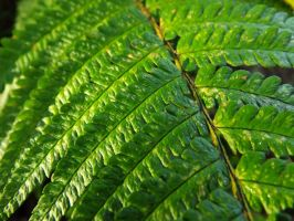 Fern Leaf Stock by Embrace-The-Night