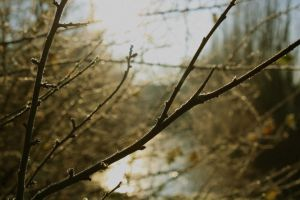 twigs background by MontagneStock