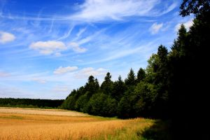 Forest and sky by polipotam