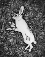 Deceased Bunny With Flower by Odd-Wad