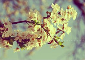 The spring came :. by estellamestella