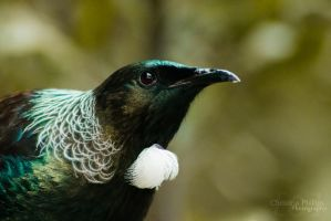 Tui-0470 by Christina-Phillips