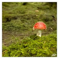 Shortcut to Mushrooms by Snapshooter