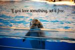 If you love something.. by Thylacinus1