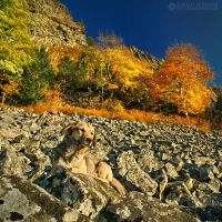 Autumn colors in Apuseni Mountains 12 by adypetrisor