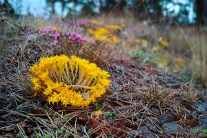 Sigma DP2 Quattro... Valaam Islands... -12- by my-shots
