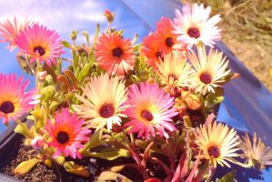 Some Flowers by TomRolfe