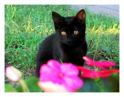 Little Black Kitten by Goodbye-kitty975
