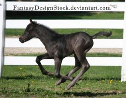 Foal-Carl 26 by FantasyDesignStock