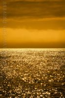 Golden 1 by HollywoodDriveby