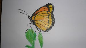 Monarch Butterfly by SoulHound568