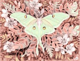 Luna Moth by golden-quince