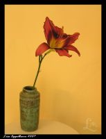 Daylily in Vase by Cillana
