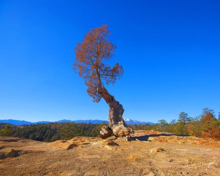 Tough Little Gnarled Tree by greenunderground